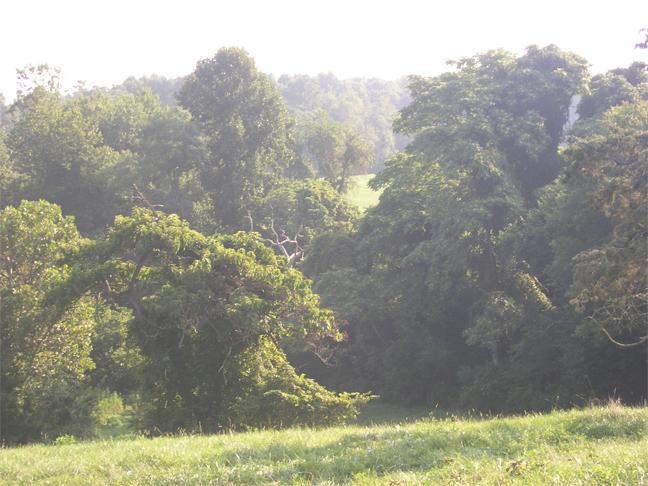 Fragonnard tree